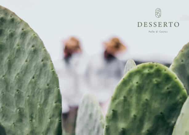 desserto materialul cactus